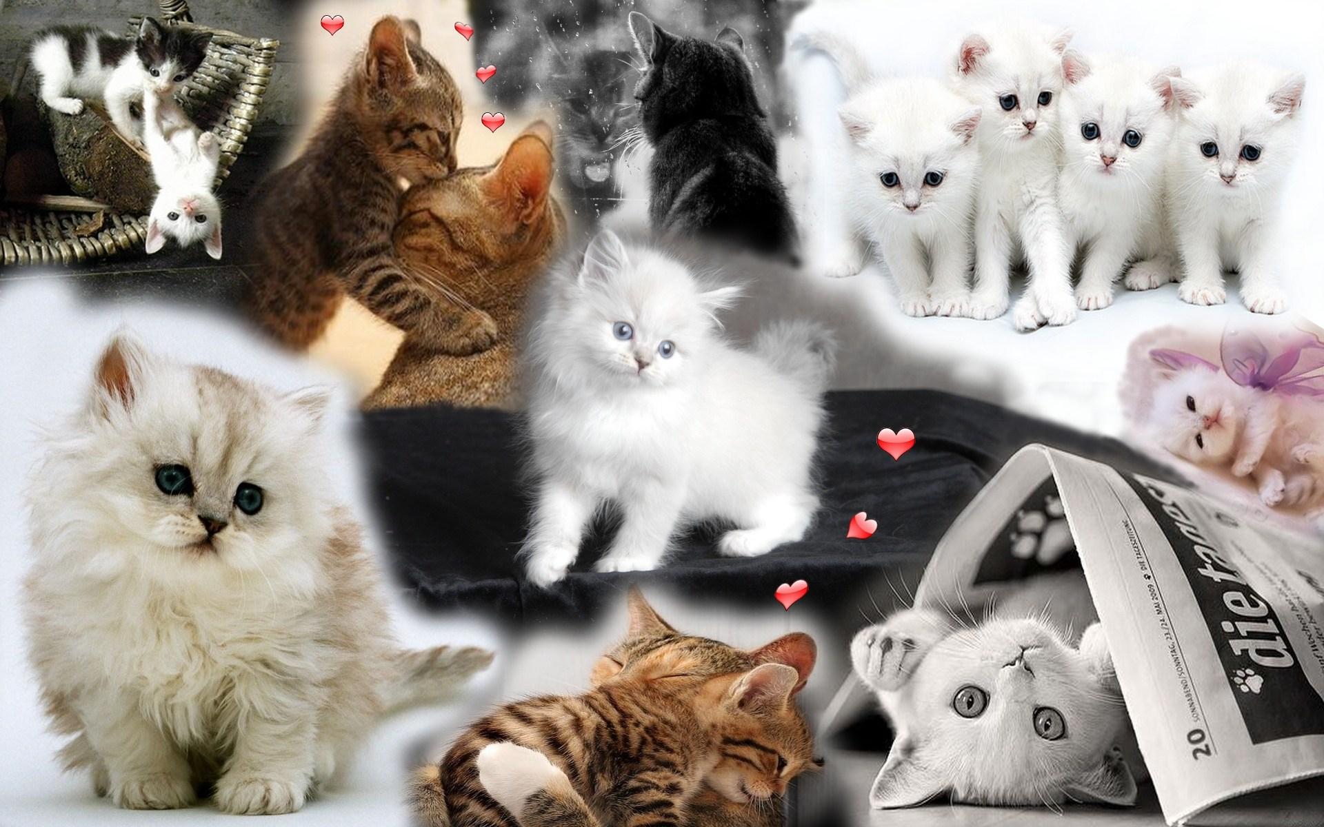 Télécharger fonds d'écran chatons gratuitement