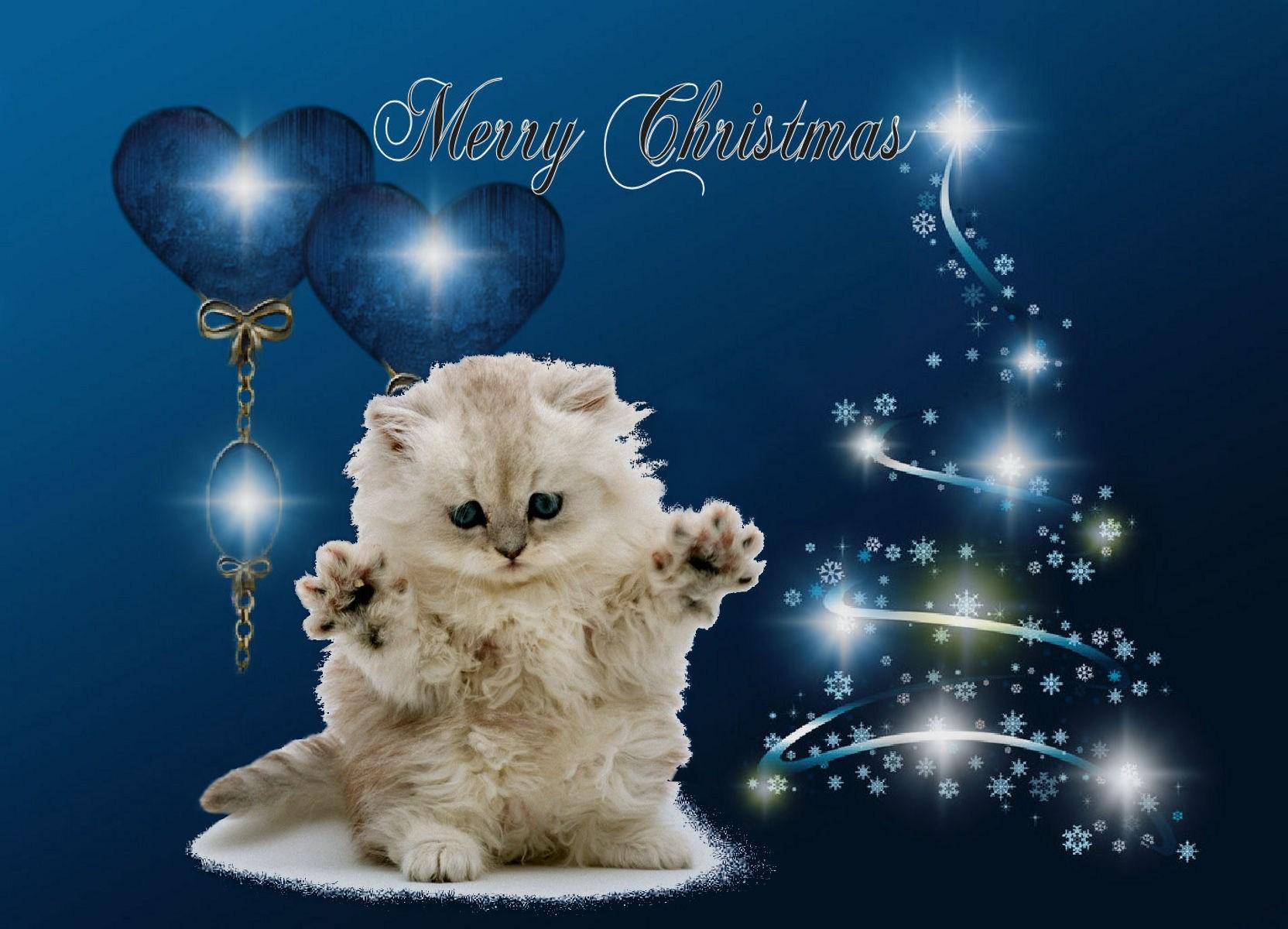 Télécharger Fonds D écran Souhaiter Joyeux Noël Avec Un Chat