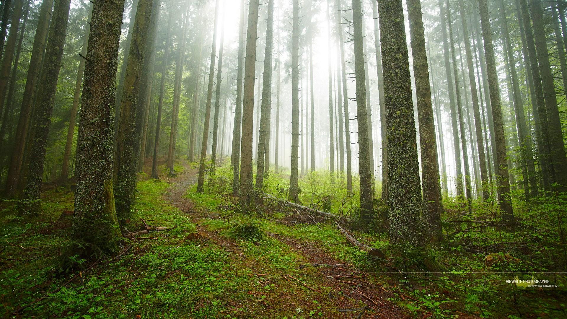 Télécharger fonds d'écran forêt gratuitement