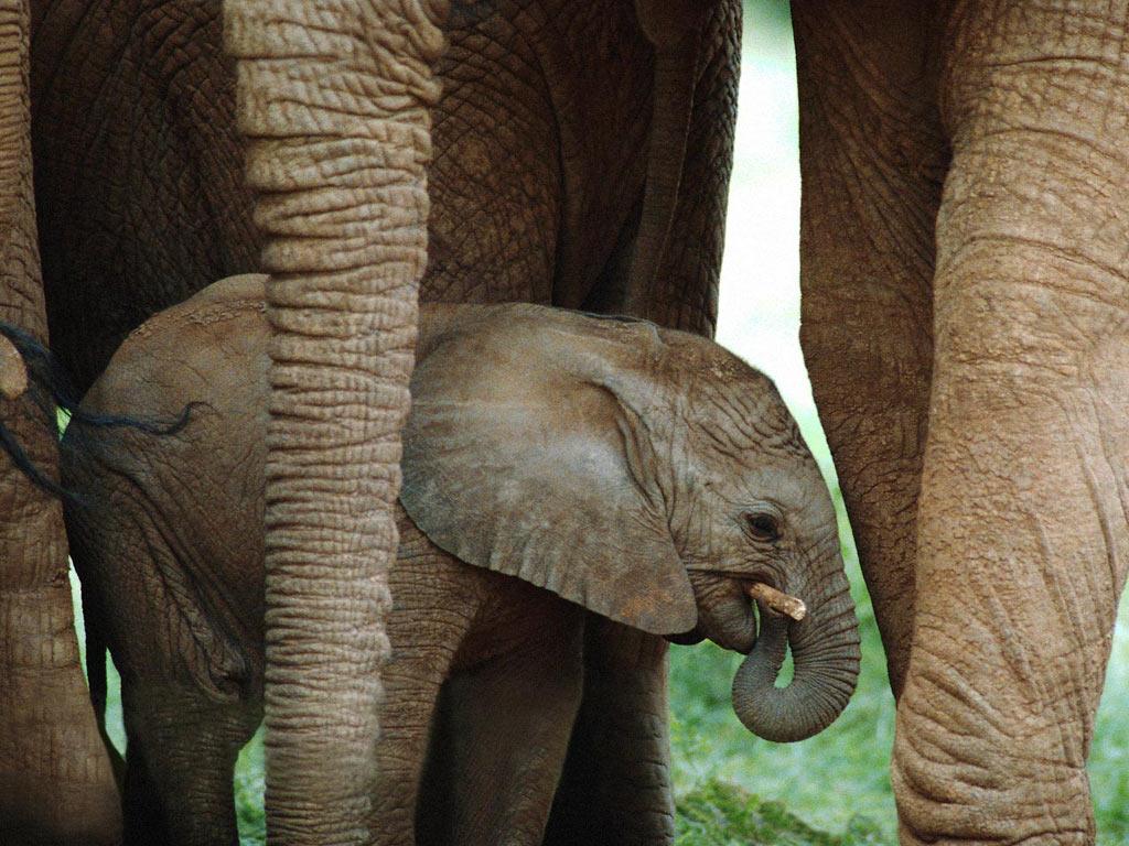 Telecharger Fonds D Ecran Bebe Elephant Gratuitement