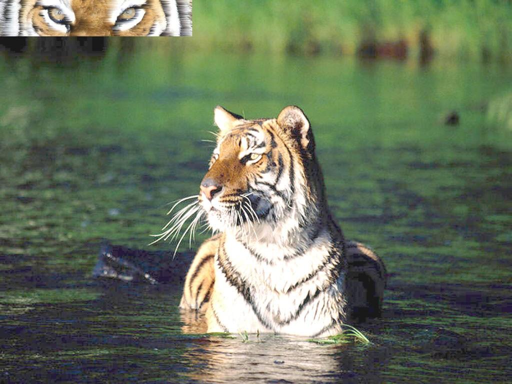 Site de rencontre avec cougar gratuit sans inscription