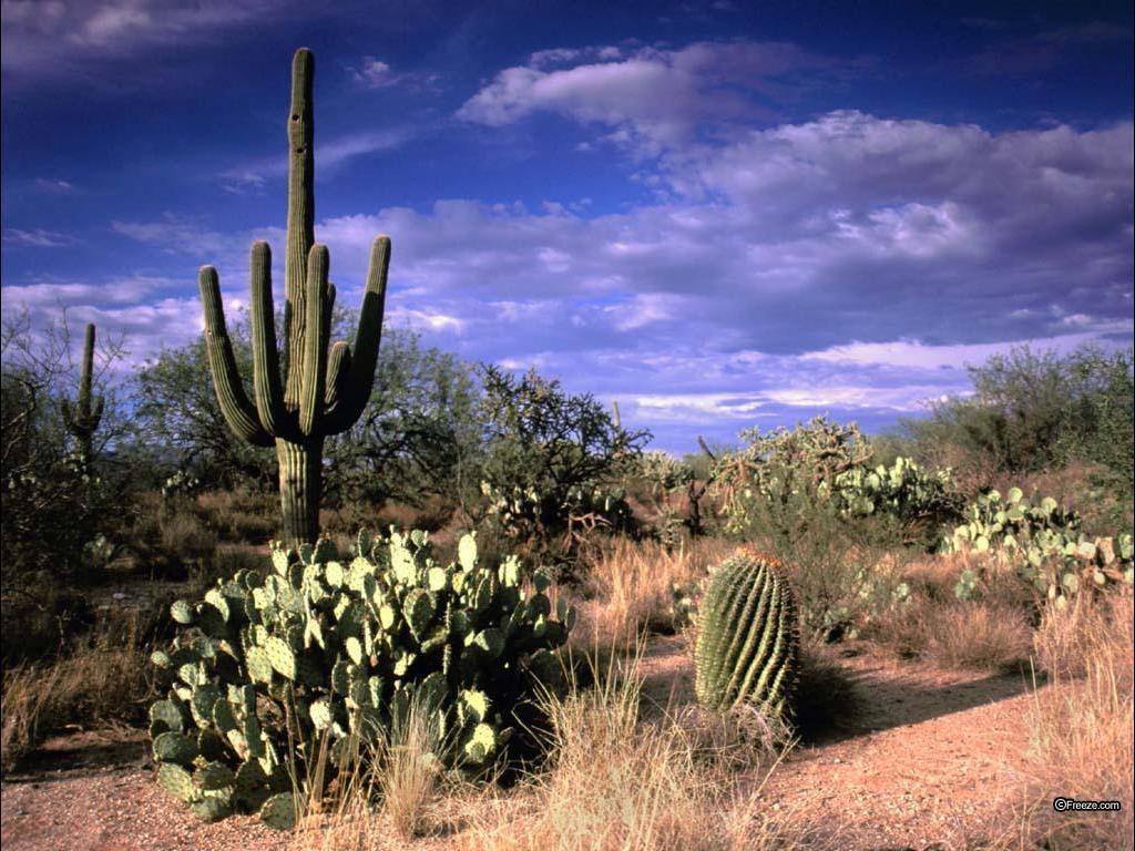 Télécharger fonds d'écran cactus dans le désert 2 gratuitement