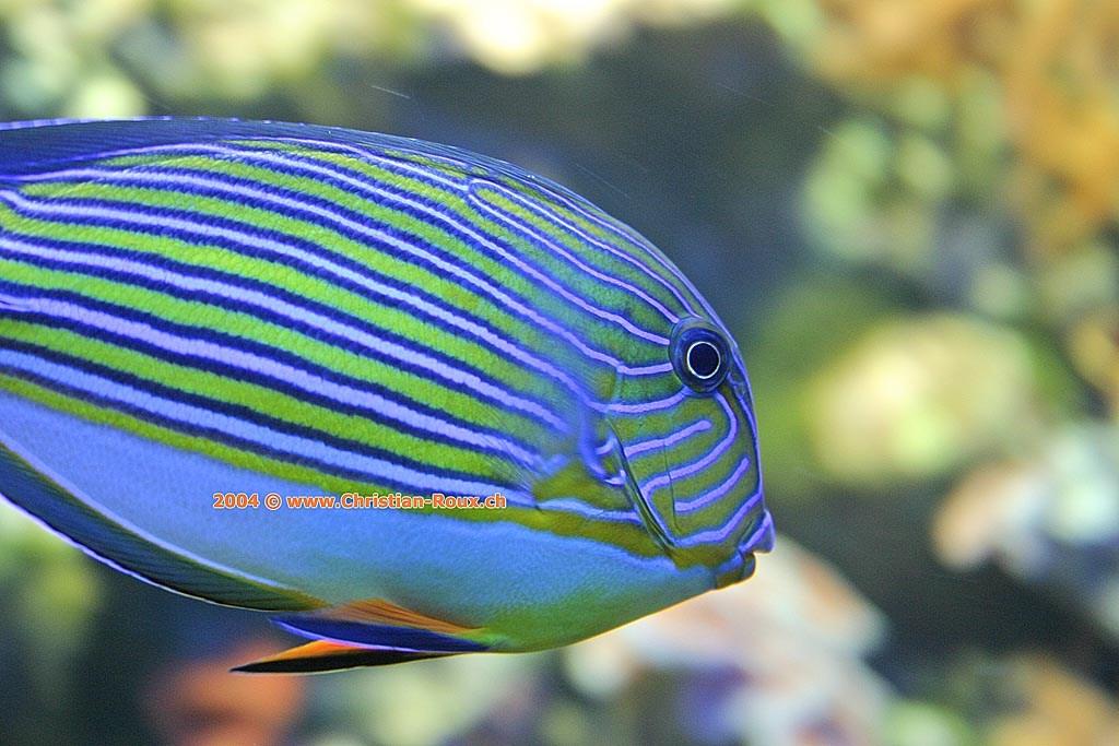 Poisson exotique (35295)